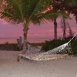 Hammock in front of coco plum