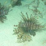 Lion fish  in front of TNI