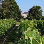 vu de la vigne