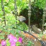 Jardín desde nuestra terraza