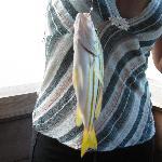 Big fish I caught
