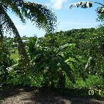 Ti'Village Creole