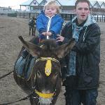 donkey ride on weston beach