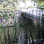 View from Hatune. See the mini bridge.
