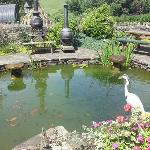 The fishpond and the barbecue area