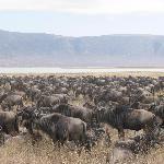 Magnifica caldera del Ngorongoro