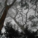 amidst mist