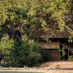 The Hide at Chamilandu Bushcamp, a great place to watch elephants in the South Luangwa, Zambia