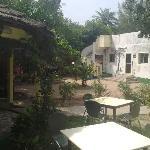 Palm Tree Beer Garden