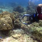 Big Fish Diving Foto