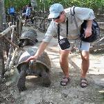 Turtles in Prison isle