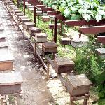 Wooden boxes as beehives.
