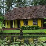 cottages with the lotus pond