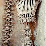 Bone Cup in entry way