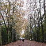 秋、プラタナスの小路、シュノンソー城へ