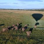 Flying over Elephants