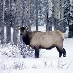 Wildlife in Banff National Park can be seen everywhere!
