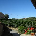 Rebberg mit Moscato Trauben von ORnella & Cesare