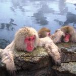 地獄谷野猿公苑 Free ride to Snow Monkey Park