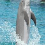 Dolphins are wonderful performers.