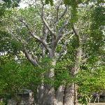 Baobab du lodge