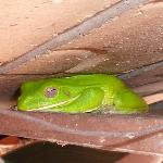 this is a frog that lives on Connie's porch