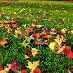 le foglie sul prato del parco