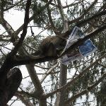 a smart pants monkey reading a russian newspaper