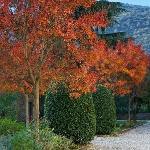 garden in the autumn