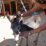 ACE-Animal Care in Egypt Foto