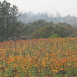 Russian River Valley winery - DeLoach Vineyards