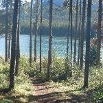 Short walk to the lake