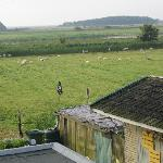 another view from our room (sheeps!)