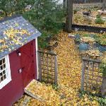 View of backyard in fall