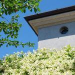 11.B&B La Colombara. Pozzolengo (Bs). Lake Garda. Northern Italy. Cherry tree and jasmin creeper
