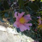 flowers still in bloom mid November