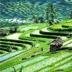 rice terrace (28887909)
