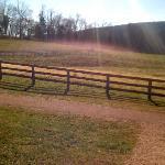 Thoroughbred pasture