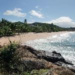 Vie along the beach