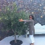 Alexandra and her beloved Olive Tree!