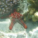 Des fonds sous marins merveilleux