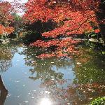 Fall at Japanese garden