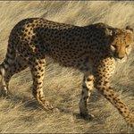 Otjitotongwe Cheetah Park