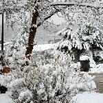 Bronze Buffalo 'Patriarch' - snowed in across street