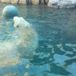 This is the view from the lower polar bear viewing area.  I am standing right at the window, no