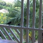 Balcon repas avec oiseaux