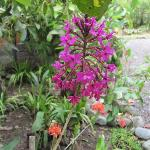 Many flowers & orchids surrounding the grounds around our cabana.