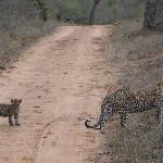 Leopard with one of her cubs