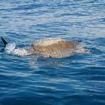 Une tortue dans la baie de Nicoya