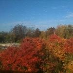 Beautiful fall colors outside my window